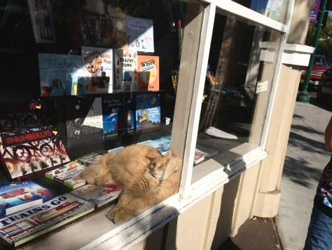 recycle-bookstore-ginger-cat