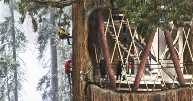 sequoia-construction