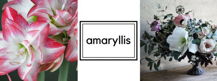 Wedding flowers cost per season bloomerent amaryllis can be accessed year round but is most available november april mightylinksfo