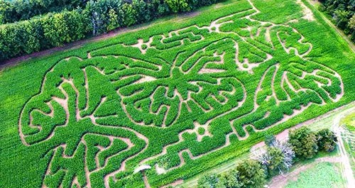 Spend a fun day with the kids in our corn maze!