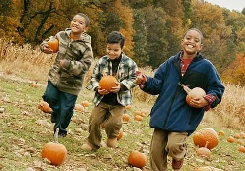 Boys-in-pumpkin-field