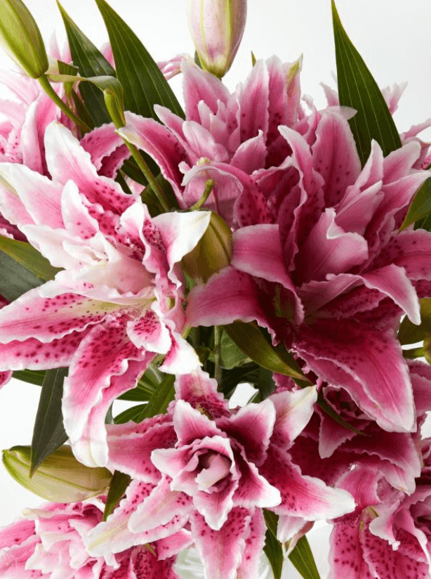 Blooms Box | Order flowers online | Flower Delivery Melbourne