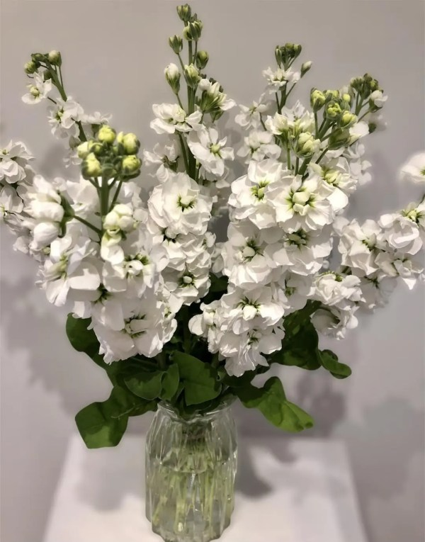 monthly flowers website pic