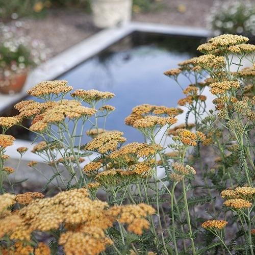 reflective_pool_Haddington-400