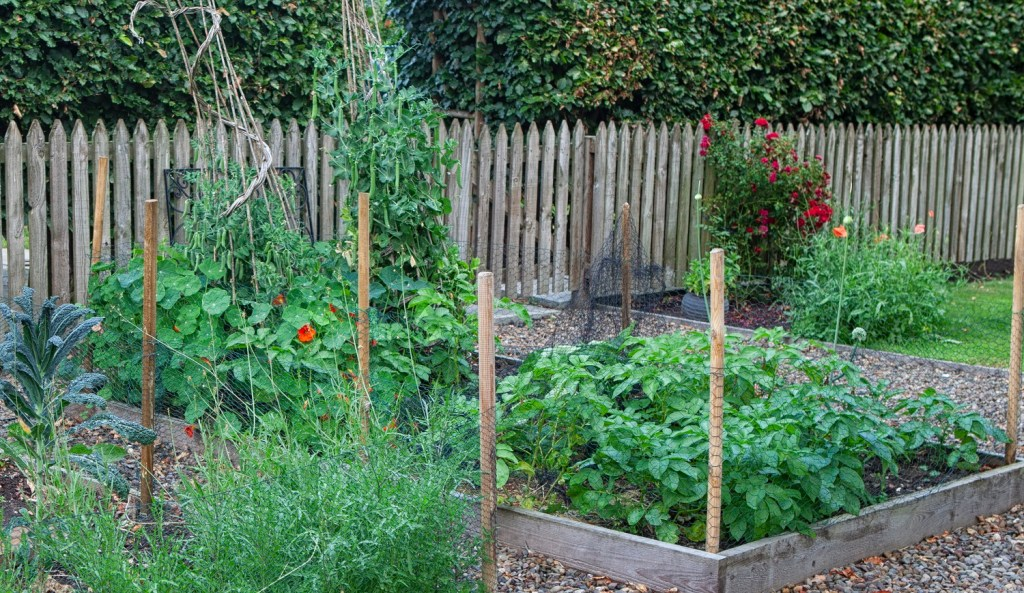 Vegetable_patch