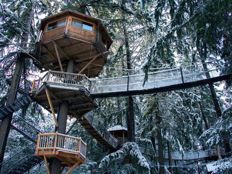 3 Steps Tree House
