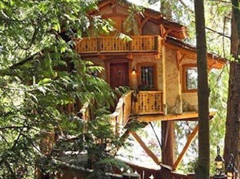 Tree House Architectural Design
