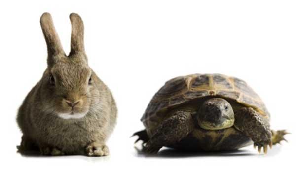 tortoise_&_hare_1