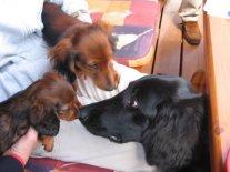 Anastasia mit zwei ihrer kleinen Lieblinge