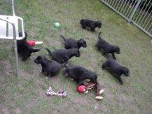 Acht Rabauken, alle von mir :)