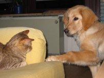 Bellis und die Hauskatze