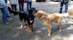 Doxi und Dylan begrüßen sich vorsichtig