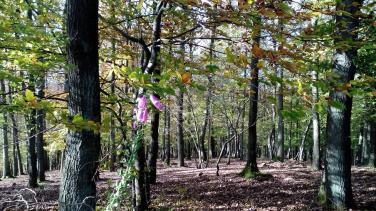 Letztes verzweifeltes Anblühen gegen den Herbst