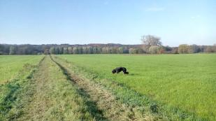 Zwischen Hülser Berg und Niep - Doxi beim Grasen