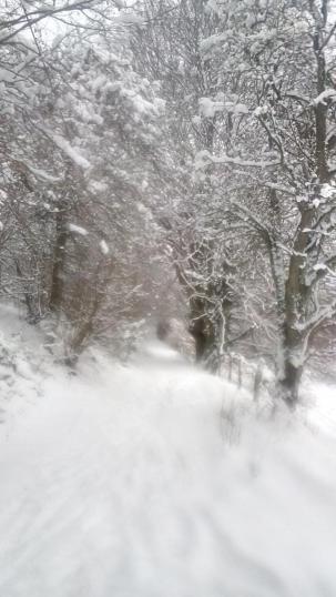 Das Perlenbachtal im Schnee
