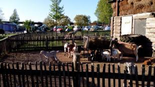 Ziegengehege auf dem Campingplatz