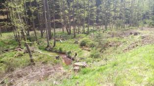Der rote Wehebach mäandert durch den Wald