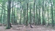 Uralte Eichen im Reinhardswald