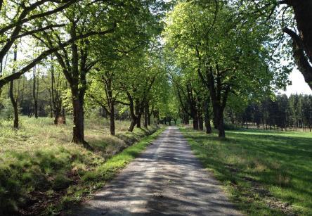 Fahrt durch den Reinhardswald