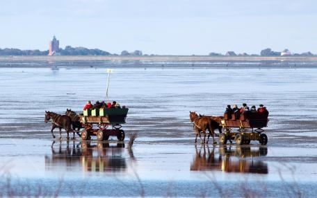 Mit Pferdekutschen übers Watt zur Insel Neuwerk