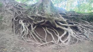 Baum am Trassenhang