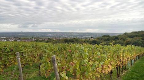 Blick hinunter durch die Weinberge des Klosters Richtung Eltville und Rhein