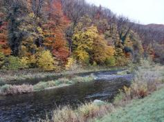 Die Wutach - ein reißender Fluss mit zurzeit allerdings wenig Wasser