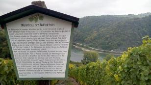 Infotafel zum Weinanbau am Mittelrhein