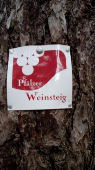 Viel bewandert: Der Pfälzer Weinsteig