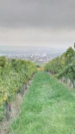 Blick durch die Weinberge hinunter auf Oetrich-Winkel