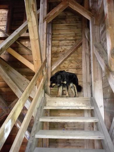Doxi beim Aufstieg im Inneren des Turms