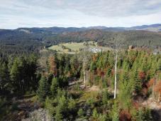 Ausblick vom Lehenkopfturm nach Osten