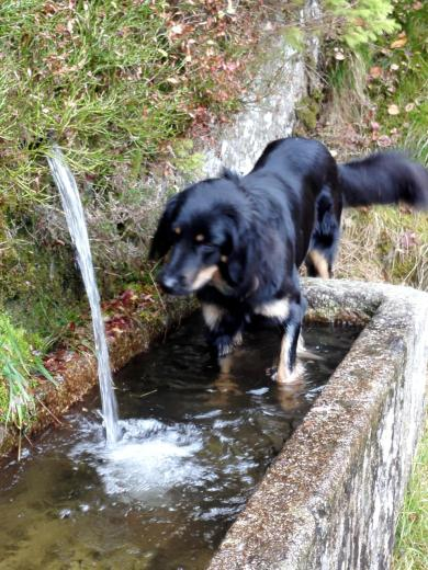 Doxi liebt einfach fließendes Wasser