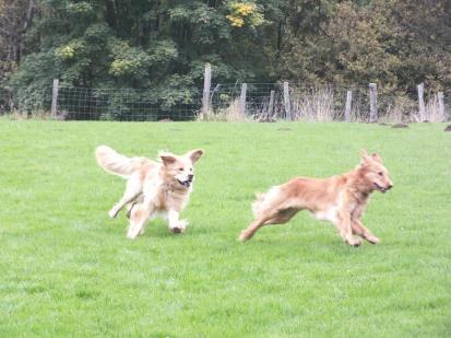 Cato und Dinah beim Spiel auf dem RZV-Platz in Gummersbach