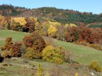 Bunter Herbstwald kurz vor Schöneberg