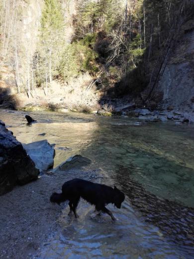Doxi will ein Stöckchen aus dem Fluss fischen