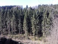 Hier dominieren Fichtenwälder
