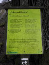 Infotafel am Odenwaldbaum