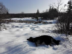 Doxi nimmt ein Bad im Schnee