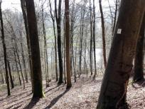 Wanderweg im Wald oberhalb des Neckars