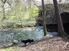 Doxi prüft die Wasserqualität der Gera