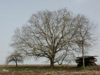 Schöner Baum am Wegesrand