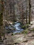 Im Vesserbachal bleibt der Wald sich selbst überlassen. Umgestürzte Bäume werden nicht weggeräumt.