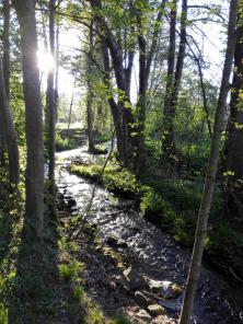 De Mühlenbach glitzert in der Sonne