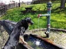 Doxi prüft das Wasser an einer Dorftränke