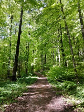 Alles Grün im Buchenwald am Stallberg