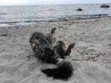 Am Hundestrand von Lubmin: Hmmm, eine feine Panade