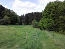 Links und rechts des Weges Kuhwiesen