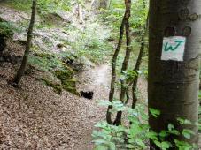Das grüne W des Wällerpfads markiert unseren Weg