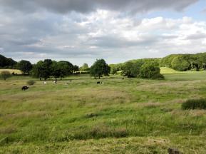 Landschaft zwischen Langballigau und Holnis